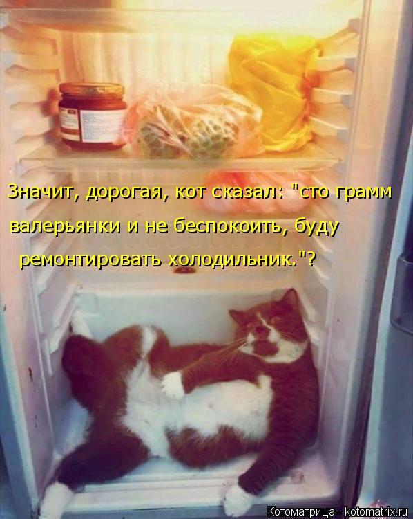 """Котоматрица: Значит, дорогая, кот сказал: """"сто грамм  валерьянки и не беспокоить, буду  ремонтировать холодильник.""""?"""