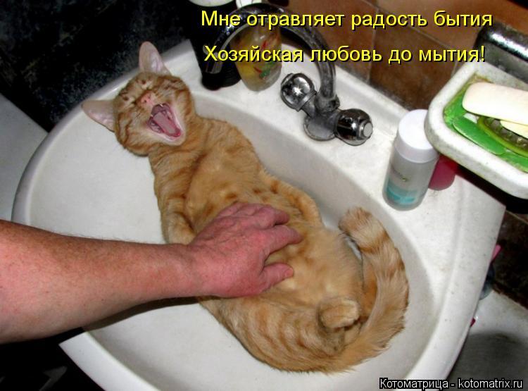 Котоматрица: Мне отравляет радость бытия Хозяйская любовь до мытия!
