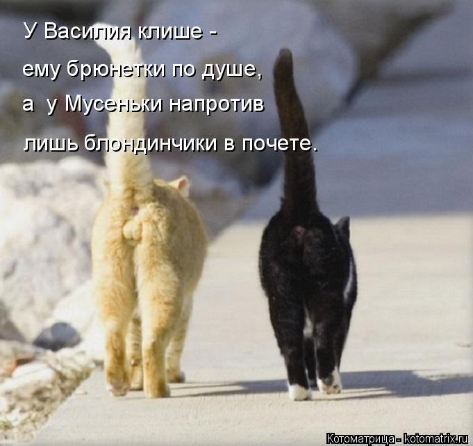 Котоматрица: У Василия клише -  а  у Мусеньки напротив лишь блондинчики в почете. ему брюнетки по душе,