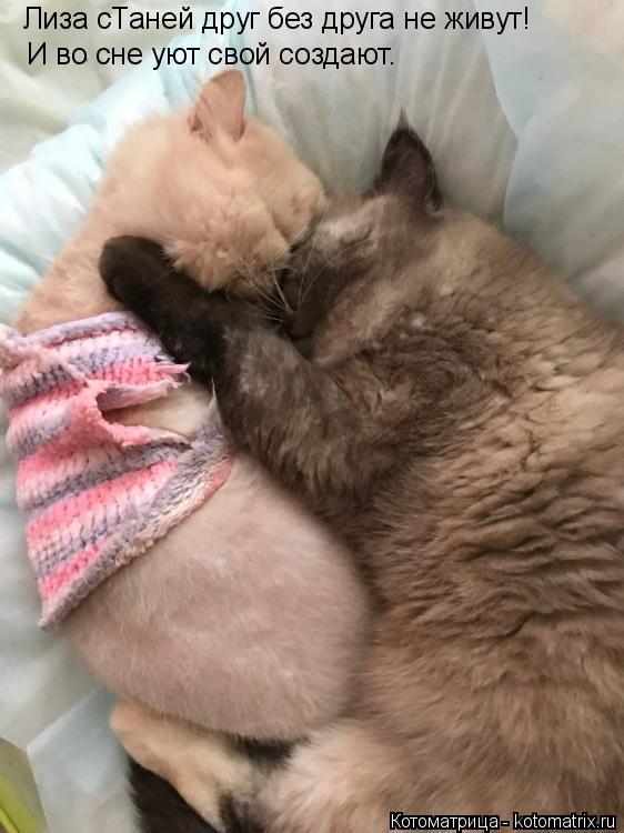 Котоматрица: Лиза сТаней друг без друга не живут! И во сне уют свой создают.