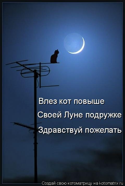 Котоматрица: Своей Луне подружке Здравствуй пожелать Влез кот повыше