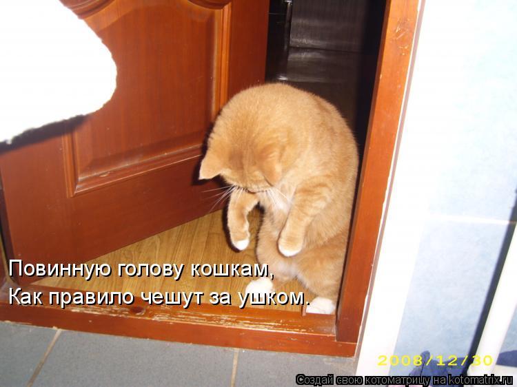 Котоматрица: Повинную голову кошкам, Как правило чешут за ушком.