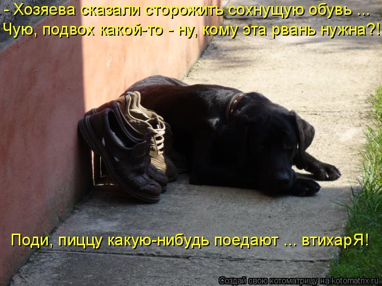 Котоматрица: - Хозяева сказали сторожить сохнущую обувь ... Чую, подвох какой-то - ну, кому эта рвань нужна?! Поди, пиццу какую-нибудь поедают ... втихарЯ!