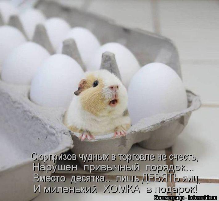 Котоматрица: Сюрпризов чудных в торговле не счесть, Нарушен  привычный  порядок... Вместо  десятка... лишь ДЕВЯТЬ яиц, И миленький  ХОМКА  в подарок!