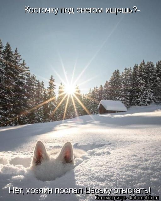 Котоматрица: Косточку под снегом ищешь?- Нет, хозяин послал Ваську отыскать!