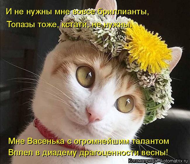Котоматрица: И не нужны мне вовсе бриллианты, Топазы тоже, кстати, не нужны. Мне Васенька с огромнейшим талантом  Вплел в диадему драгоценности весны!