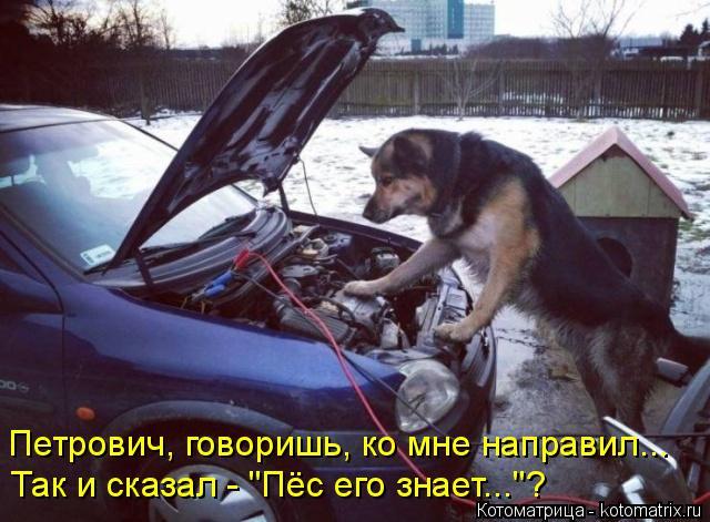"""Котоматрица: Петрович, говоришь, ко мне направил... Так и сказал - """"Пёс его знает...""""?"""