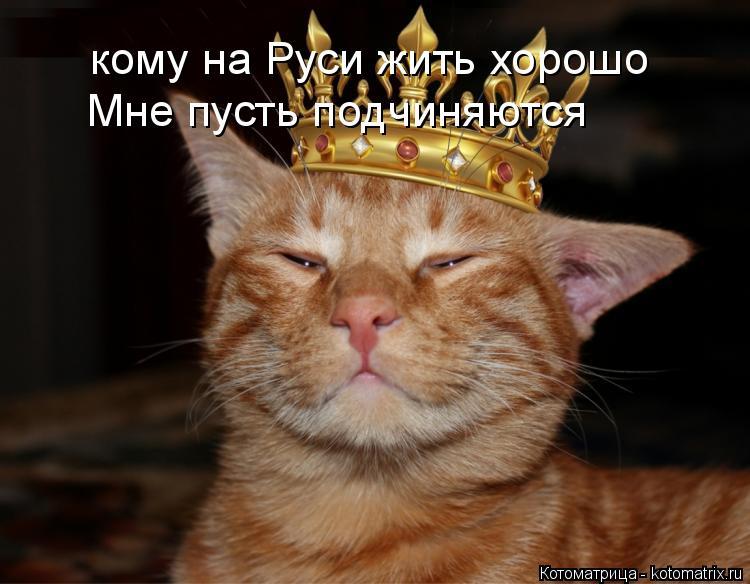 Котоматрица: кому на Руси жить хорошо Мне пусть подчиняются
