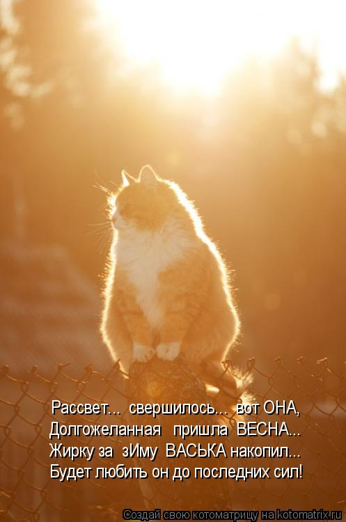 Котоматрица: Рассвет...  свершилось...  вот ОНА, Долгожеланная   пришла  ВЕСНА... Жирку за  зИму  ВАСЬКА накопил... Будет любить он до последних сил!