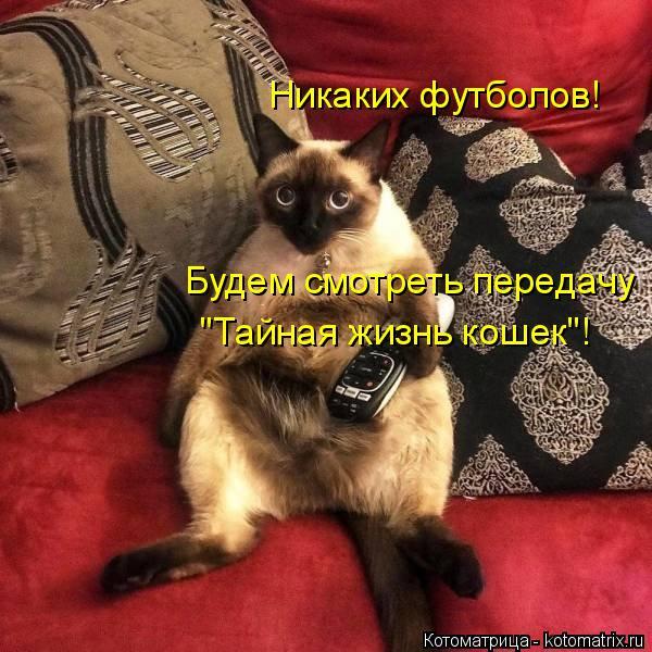 """Котоматрица: Никаких футболов! Будем смотреть передачу """"Тайная жизнь кошек""""!"""