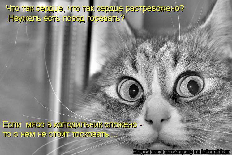 Котоматрица: Что так сердце, что так сердце растревожено? Если  мясо в холодильник сложено -  то о нем не стоит тосковать.... Неужель есть повод горевать?