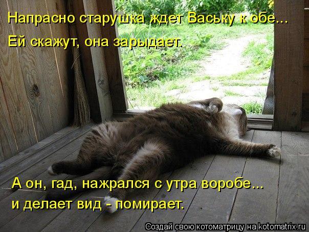 Котоматрица: Напрасно старушка ждет Ваську к обе... Ей скажут, она зарыдает. А он, гад, нажрался с утра воробе... и делает вид - помирает.