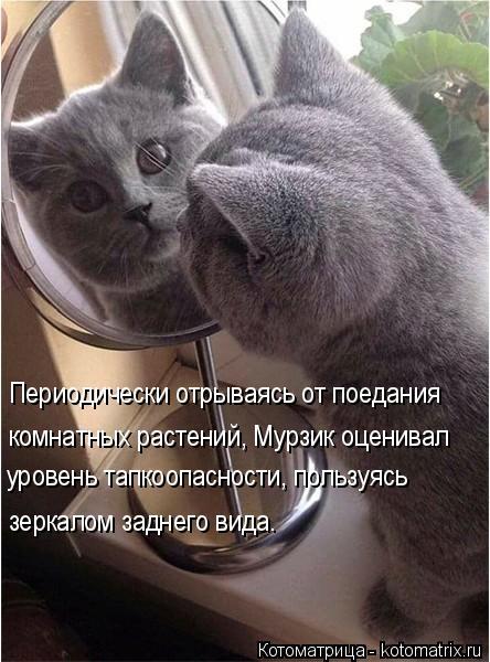 Котоматрица: Периодически отрываясь от поедания комнатных растений, Мурзик оценивал уровень тапкоопасности, пользуясь зеркалом заднего вида.