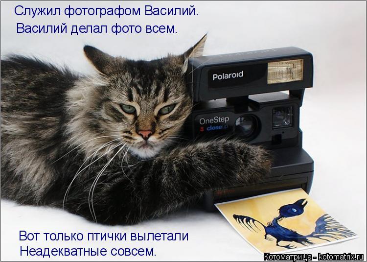 Котоматрица: Служил фотографом Василий. Василий делал фото всем. Вот только птички вылетали Неадекватные совсем.