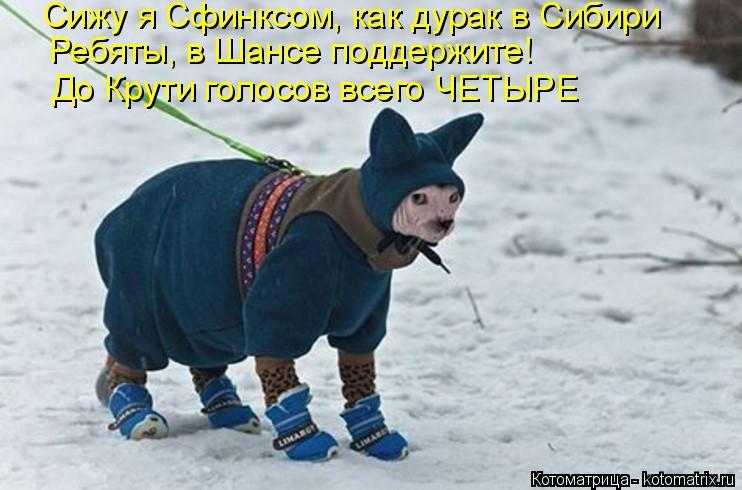 Котоматрица: Сижу я Сфинксом, как дурак в Сибири Ребяты, в Шансе поддержите! До Крути голосов всего ЧЕТЫРЕ