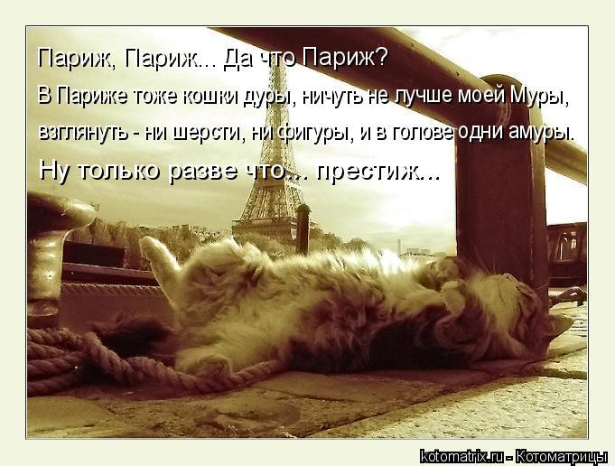 Котоматрица: В Париже тоже кошки дуры, ничуть не лучше моей Муры, Париж, Париж... Да что Париж? взглянуть - ни шерсти, ни фигуры, и в голове одни амуры. Ну тол?