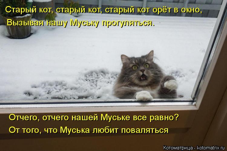 Котоматрица: Старый кот, старый кот, старый кот орёт в окно, Вызывая нашу Муську прогуляться. Отчего, отчего нашей Муське все равно? От того, что Муська лю?