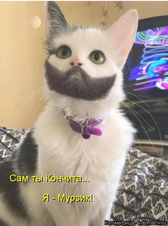Котоматрица: Сам ты Кончита... Я - Мурзик!