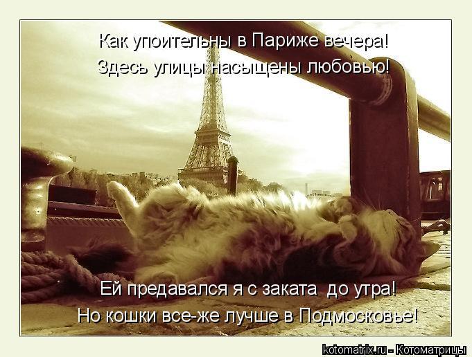 Котоматрица: Как упоительны в Париже вечера! Здесь улицы насыщены любовью! Ей предавался я с заката  до утра! Но кошки все-же лучше в Подмосковье!