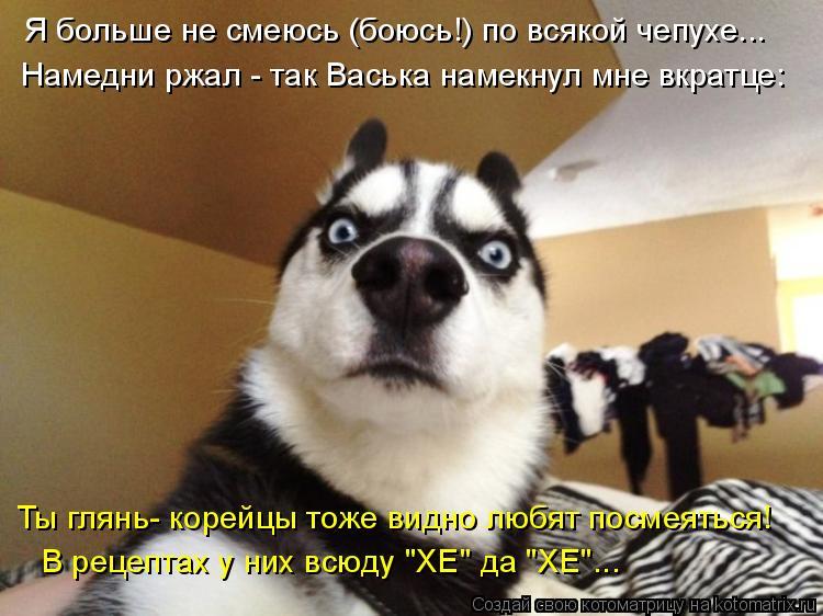 """Котоматрица: Я больше не смеюсь (боюсь!) по всякой чепухе... Намедни ржал - так Васька намекнул мне вкратце: В рецептах у них всюду """"ХЕ"""" да """"ХЕ""""... Ты глянь- кор?"""