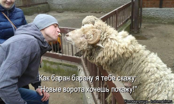 """Котоматрица: Как баран барану я тебе скажу:  """"Новые ворота хочешь покажу!"""""""