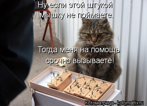 Котоматрица: Ну если этой штукой мышку не поймаете. Тогда меня на помощь срочно вызываете!