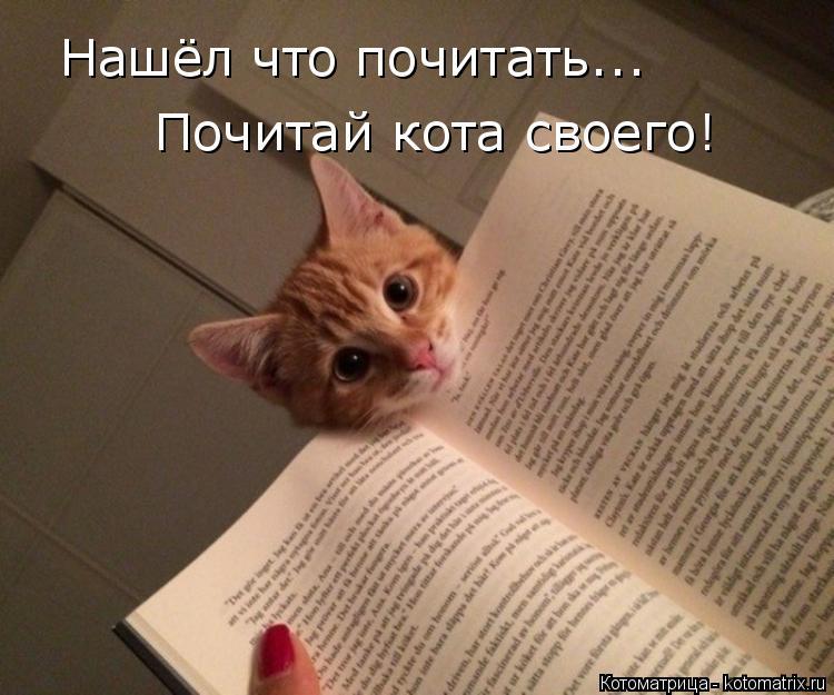 Котоматрица: Нашёл что почитать... Нашёл что почитать... Почитай кота своего!