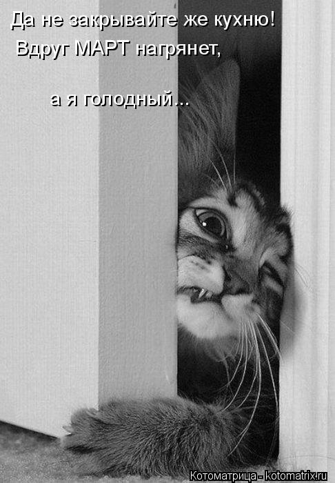 Котоматрица: Да не закрывайте же кухню! Вдруг МАРТ нагрянет, а я голодный...
