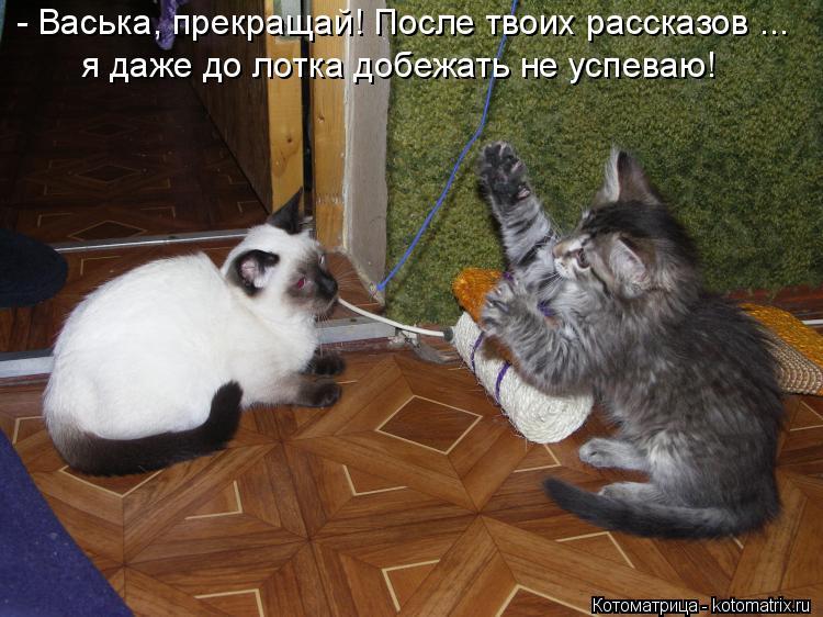 Котоматрица: - Васька, прекращай! После твоих рассказов ... я даже до лотка добежать не успеваю!