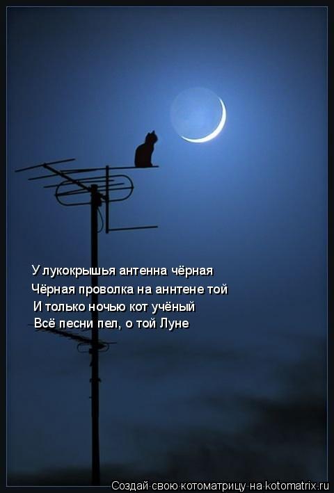 Котоматрица: У лукокрышья антенна чёрная Чёрная проволка на аннтене той И только ночью кот учёный  Всё песни пел, о той Луне
