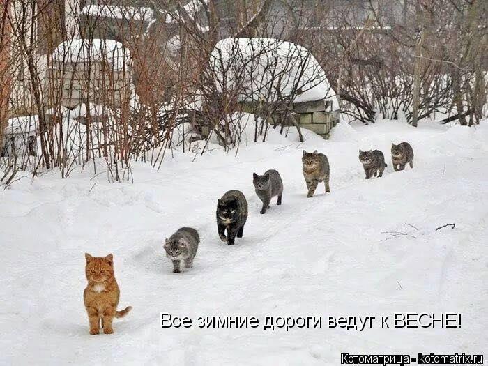 Котоматрица: Все зимние дороги ведут к ВЕСНЕ!