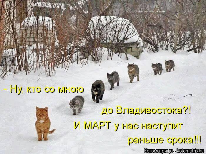 Котоматрица: - Ну, кто со мною до Владивостока?! И МАРТ у нас наступит раньше срока!!!