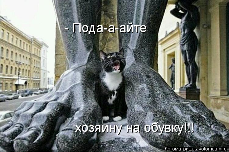 Котоматрица: - Пода-а-айте  хозяину на обувку!!!