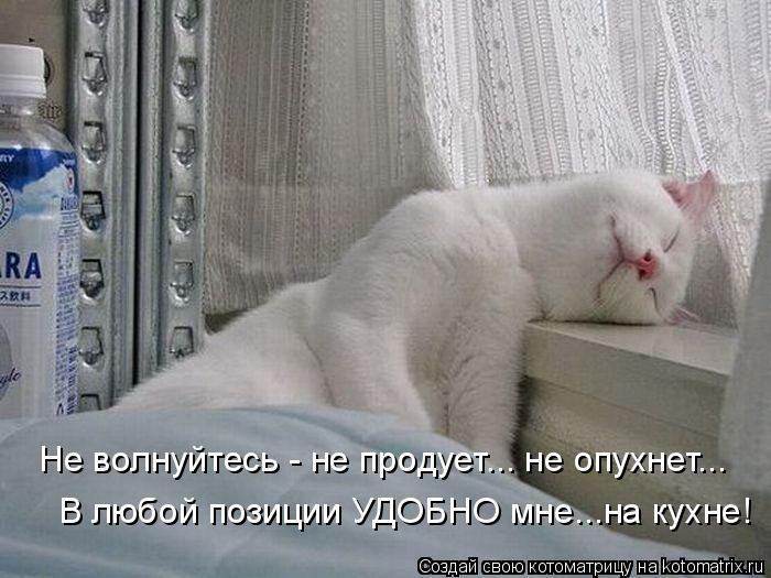 Котоматрица: Не волнуйтесь - не продует... не опухнет... В любой позиции УДОБНО мне...на кухне!