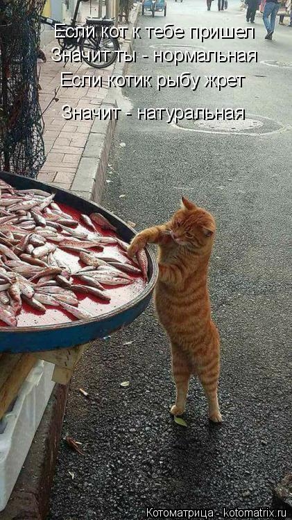 Котоматрица: Если кот к тебе пришел Значит ты - нормальная Если котик рыбу жрет Значит - натуральная