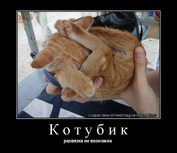 Котоматрица: Котубик развязка не возможна
