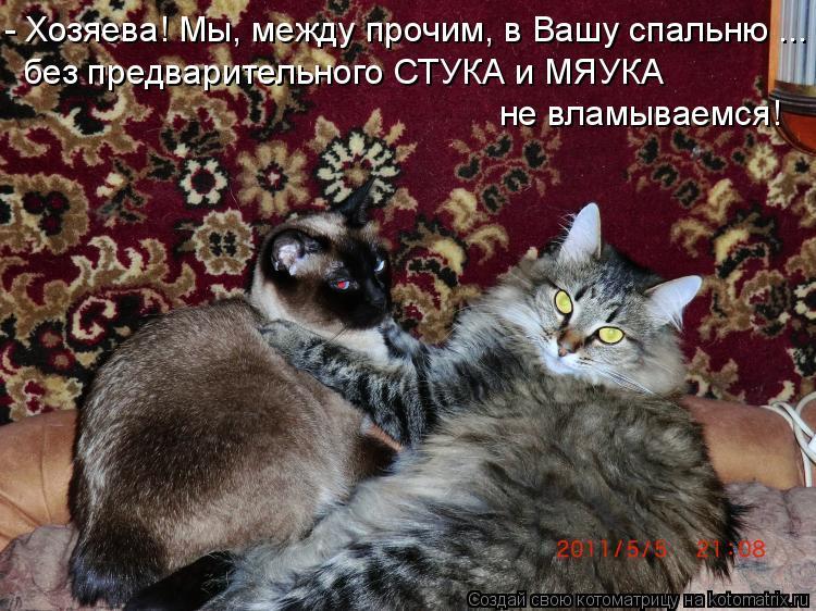 Котоматрица: - Хозяева! Мы, между прочим, в Вашу спальню ... без предварительного СТУКА и МЯУКА  не вламываемся!