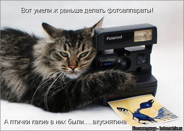 Котоматрица: Вот умели ж раньше делать фотоаппараты!  А птички какие в них были.....вкуснятина
