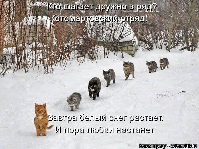 Котоматрица: Кто шагает дружно в ряд? Котомартовский отряд! Завтра белый снег растает. И пора любви настанет!