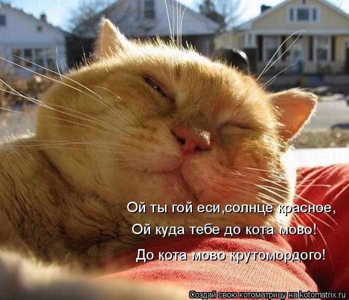 Котоматрица: Ой ты гой еси,солнце красное, Ой куда тебе до кота мово! До кота мово крутомордого!