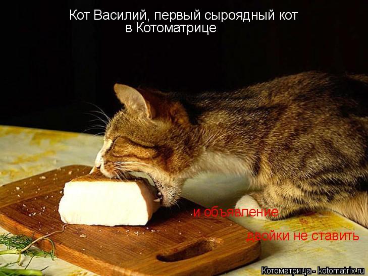 Котоматрица: Кот Василий, первый сыроядный кот   в Котоматрице  и объявление двойки не ставить
