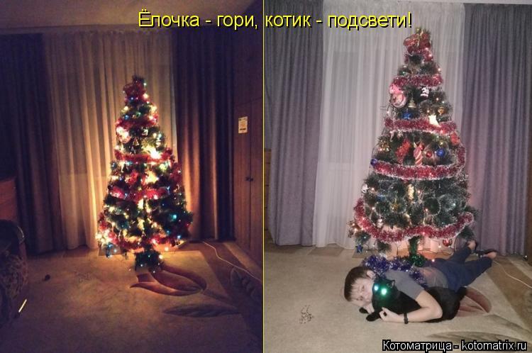 Котоматрица: Ёлочка - гори, котик - подсвети!