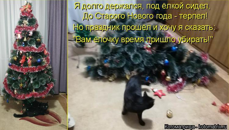 """Котоматрица: До Старого Нового года - терпел! Но праздник прошёл и хочу я сказать: """"Вам ёлочку время пришло убирать!"""" Я долго держался, под ёлкой сидел,"""