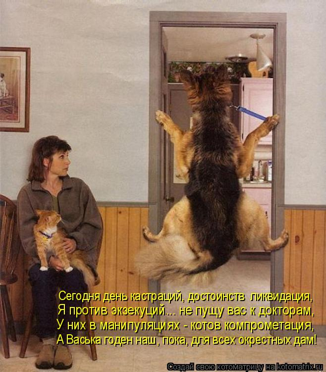 Котоматрица: Сегодня день кастраций, достоинств  ликвидация, Я против экзекуций... не пущу вас к докторам, У них в манипуляциях - котов компрометация, А Ва?