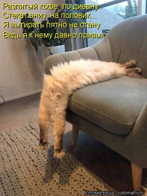 Котоматрица: Разлитый кофе, по дивану   Стекат вниз, на половик...  Я вытирать пятно не стану  Ведь я к нему давно привык.