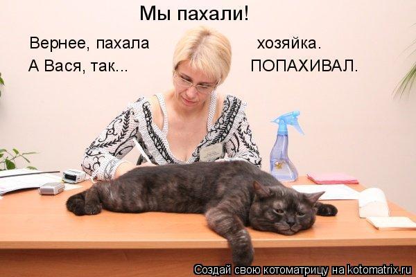Котоматрица: Мы пахали! Вернее, пахала                       хозяйка. А Вася, так...                          ПОПАХИВАЛ.