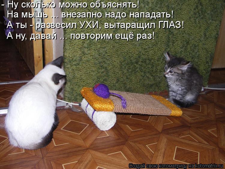 Котоматрица: - Ну сколько можно объяснять! На мышь ... внезапно надо нападать! А ты - развесил УХИ, вытаращил ГЛАЗ! А ну, давай ... повторим ещё раз!