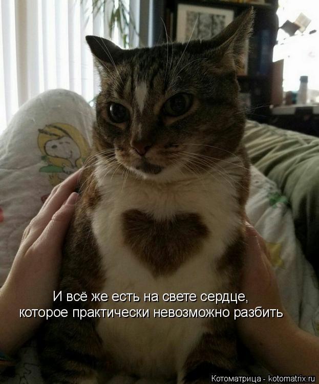 Котоматрица: И всё же есть на свете сердце, которое практически невозможно разбить