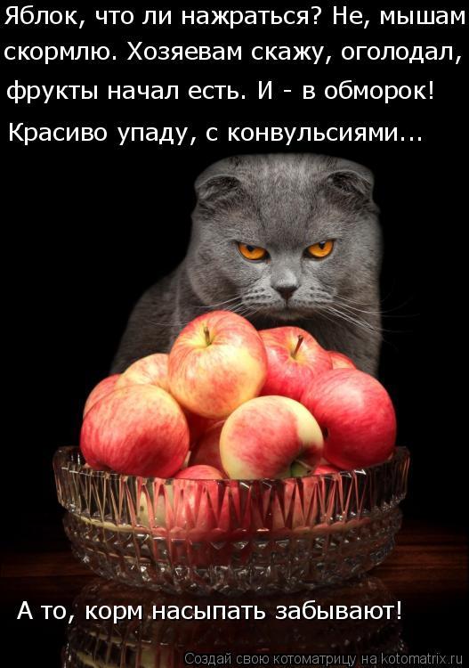 Котоматрица: Яблок, что ли нажраться? Не, мышам  скормлю. Хозяевам скажу, оголодал,  фрукты начал есть. И - в обморок! Красиво упаду, с конвульсиями... А то, ко