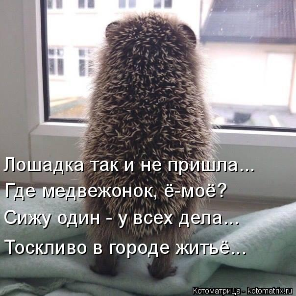 Котоматрица: Лошадка так и не пришла... Где медвежонок, ё-моё? Сижу один - у всех дела... Тоскливо в городе житьё...